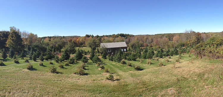 Panorama view of Riverwind Tree Farm this past fall